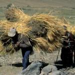 Ladakh05_1300390