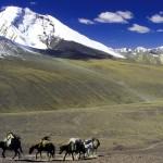 Ladakh_Markha_060286